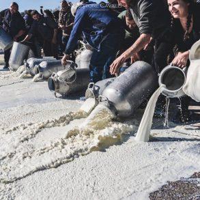 Sardinian shepherds' protest against milk low price