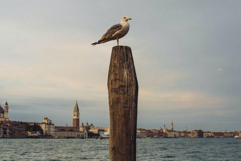 Seagull in Venice