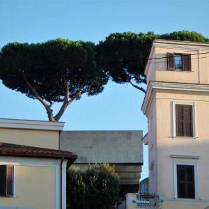 Pinus Rome