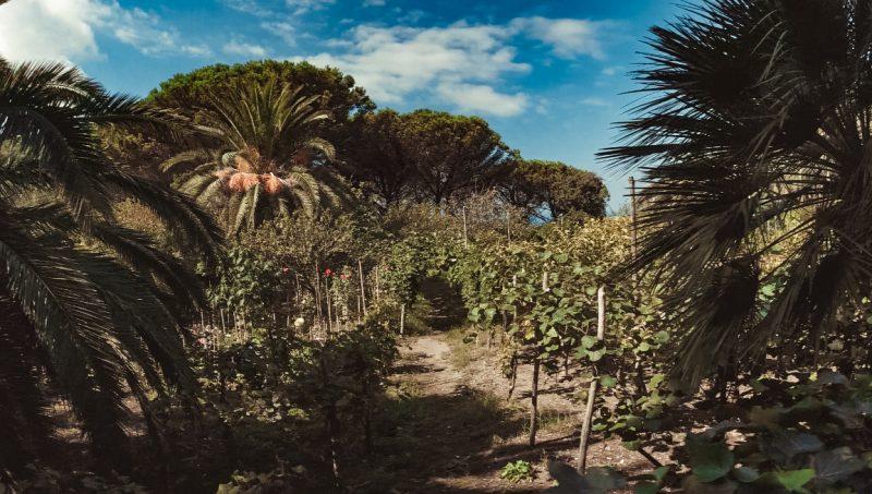 Capri Villa Jovis